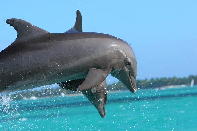 delfíni chorvatsko